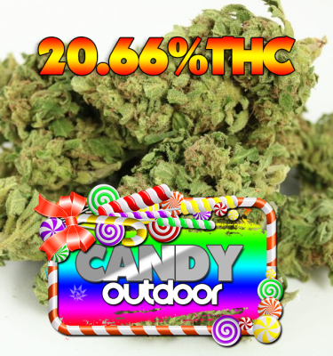 Candy Outdoor
