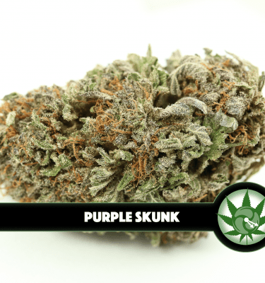 Purple Skunk