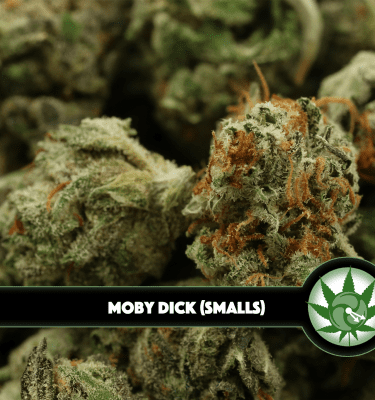 Moby Dick (Smalls)