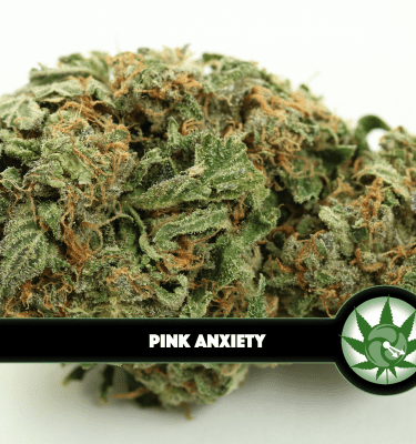 Pink Anxiety