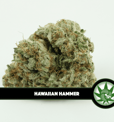 Hawaiian Hammer