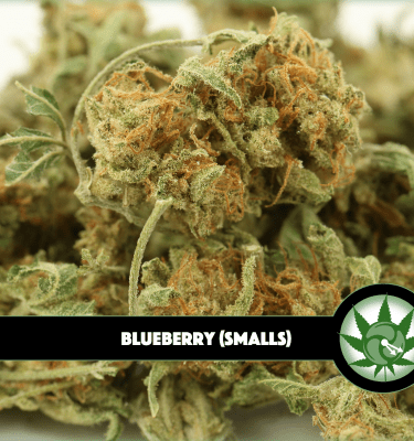 Blueberry (Smalls)